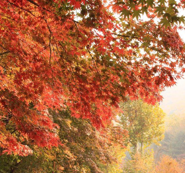 Jesień w Zieleńcu