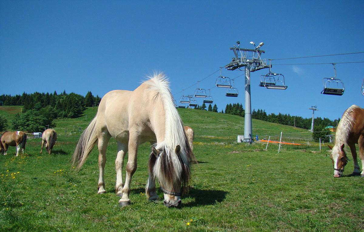 rancho-gryglowka-zieleniec-konie-06