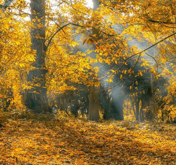 Odkryj kolory jesieni w Zieleńcu
